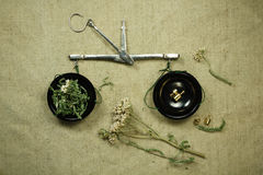 Yarrow. Dried. Herbal medicine, phytotherapy medicinal herbs. Stock Photos