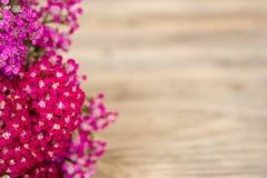 Yarrow Flower Imágenes de archivo libres de regalías
