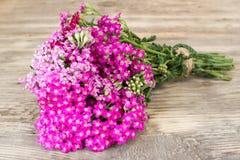 Yarrow Flower royaltyfria foton
