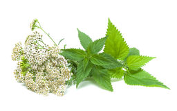 Yarrow and nettle on white background Royalty Free Stock Image