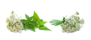 Yarrow and nettle on white background. Horizontal photo royalty free stock photos