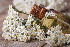 Yarrow oil in the bottle close-up horizontal Stock Photos