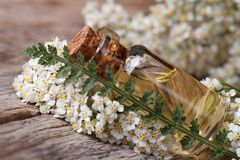 Yarrow oil in a bottle with flowers on the table. horizontal Royalty Free Stock Images