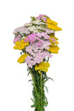 Yarrow and tansy bouquet Stock Images