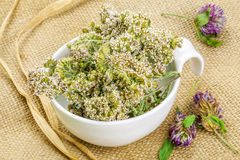 Yarrow in white bowl on rustic jute fabric Stock Photo