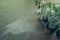 Yarrow on a wooden table. Photo with toning Stock Image