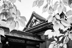 Yasaka Shrine Honden View in black and white filtered through backlit leaves in Kyoto royalty free stock image