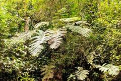 Yasuni flora Arkivfoton