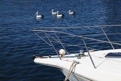 Yatch с пеликанами на заднем плане Стоковое Изображение RF
