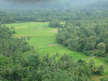 Yatigaloluwa-Sri Lanka stockbilder