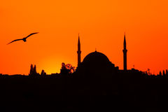 Yavuz Sultan Selim Camii al tramonto. Sunset in Istanbul with the silhouette of the Yavuz Sultan Selim Mosque and a seagull Royalty Free Stock Photos