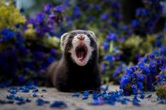 Yawn stock photography