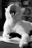 Yawn cat Royalty Free Stock Photos