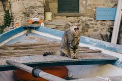Yawn. A cat on a boat Royalty Free Stock Photography