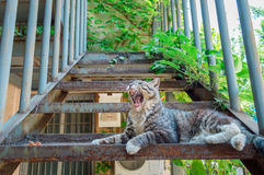 Yawn cat Stock Images