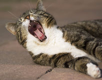 Yawning. royalty free stock photography