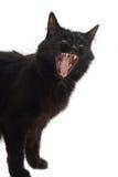 Yawning black cat. Isolated on white Stock Photo