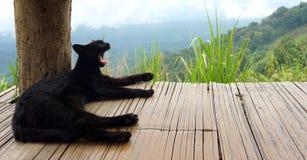 A yawning black cat Royalty Free Stock Photo