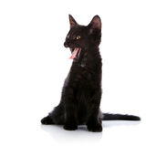 Yawning black kitten. Royalty Free Stock Photos
