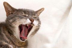 Yawning cat Stock Photo