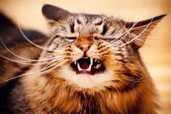 Yawning cat stock image