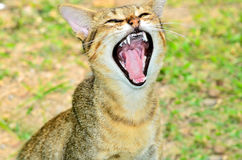 Yawning cat against Stock Images