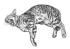 Yawning cat Royalty Free Stock Photo
