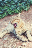 Yawning cat on the way. Vertical Stock Image