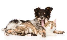 Yawning dog embracing cat. isolated on white background.  Royalty Free Stock Image