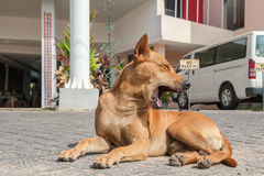 Yawning dog on a pavement near the house Royalty Free Stock Images
