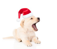yawning golden retriever puppy dog in red christmas hat. isolated on white Stock Photo