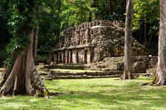 Yaxchilan Maya ruins in Mexico Stock Images