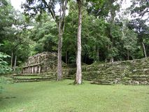 Yaxchilan Ruins and Jungle Royalty Free Stock Images