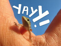 Yayy. Lizard on human hand against blue sky with the word YAYY in white text Stock Photos