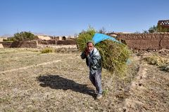 Farmer carries hay bundle from fields near Saryazd Fortress, Ira royalty free stock photo