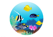 życia morze Zdjęcia Stock