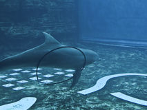 życia underwater zdjęcia stock