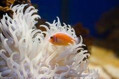 życia underwater fotografia stock