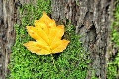 życie ciągle jesieni Obrazy Royalty Free