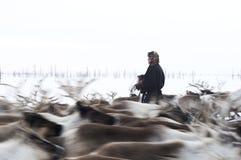 Życie codzienne Rosyjscy tubylczy reniferowi poganiacze bydła w Arktycznym Zdjęcie Royalty Free