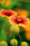 Życie jest pięknymi kwiatami Zdjęcia Royalty Free