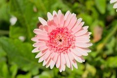 Życie kwiaty Fotografia Stock