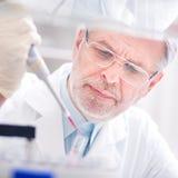 Życie naukowiec bada w laboratorium. Fotografia Royalty Free