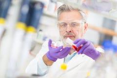 Życie naukowiec bada w laboratorium. Obrazy Royalty Free