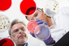 Życie naukowowie bada w opieki zdrowotnej laboratorium Obraz Stock