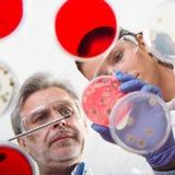 Życie naukowowie bada w opieki zdrowotnej laboratorium Obrazy Stock