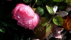 Życie po deszczu Latvia Saulkrasti Zdjęcie Royalty Free