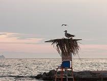 Życie strażnika seagull Obrazy Stock