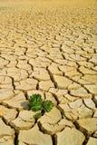 Życie w suchej ziemi Zdjęcia Stock