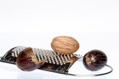 Życiorys nutmeg Fotografia Stock